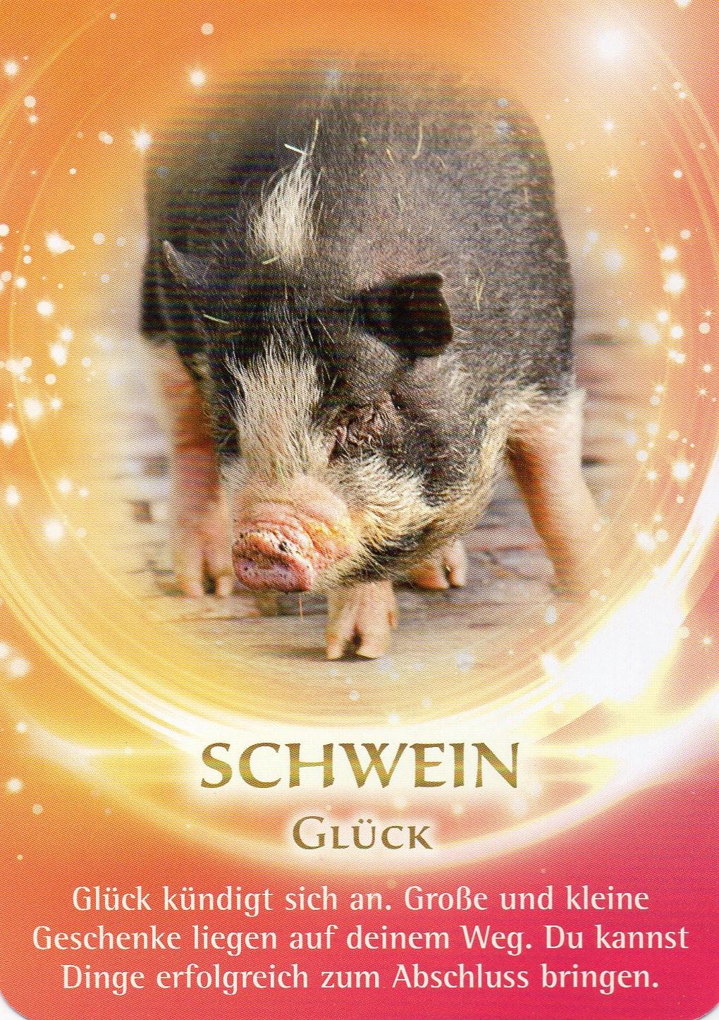 Schwein krafttier Martina Hera