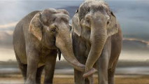 Elefantenknuddel