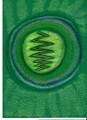 ANA - LICHT (Lichtkristall, gechannelt von Sabine Sangitar, Kryonschule)