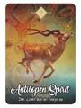 Antilopen Spirit