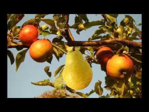Der Apfel vom Baum der Erkenntnis und die Birne der Bewusstheit