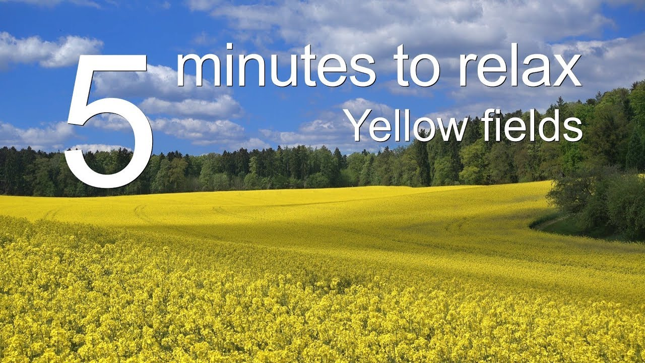 5 Minutes to Relax: Yellow Fields | 5 Minutes Relaxing Music for Stress Relief, Rapeseed Fields 5007